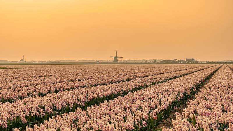 stedentrip naar Nederland